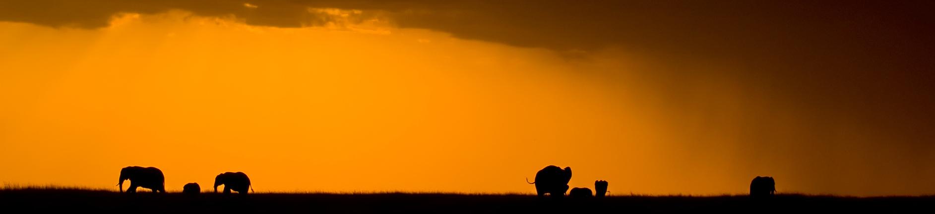 Sloni v desti